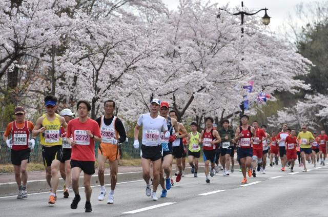 「慶州さくら マラソン&ウォーク2016」の画像