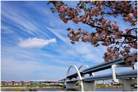 「第4回 あだち五色桜マラソン」の画像