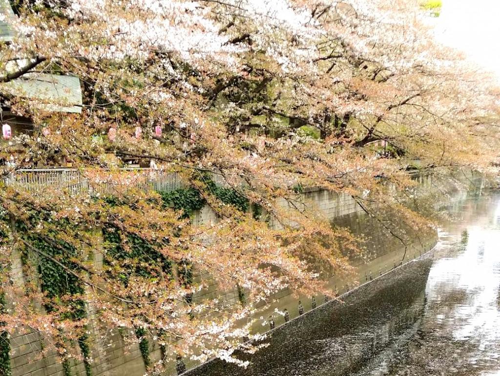 「3月末は皇居を飛び出そう!「皇居乾通り一般公開」時に走りたい周辺ランニングコース」の画像