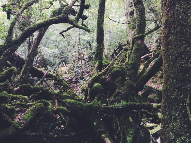 """「『もののけ姫』の""""森""""のイメージにもなった「白谷雲水峡」は走り抜けても気持ち良かった!!」の画像"""