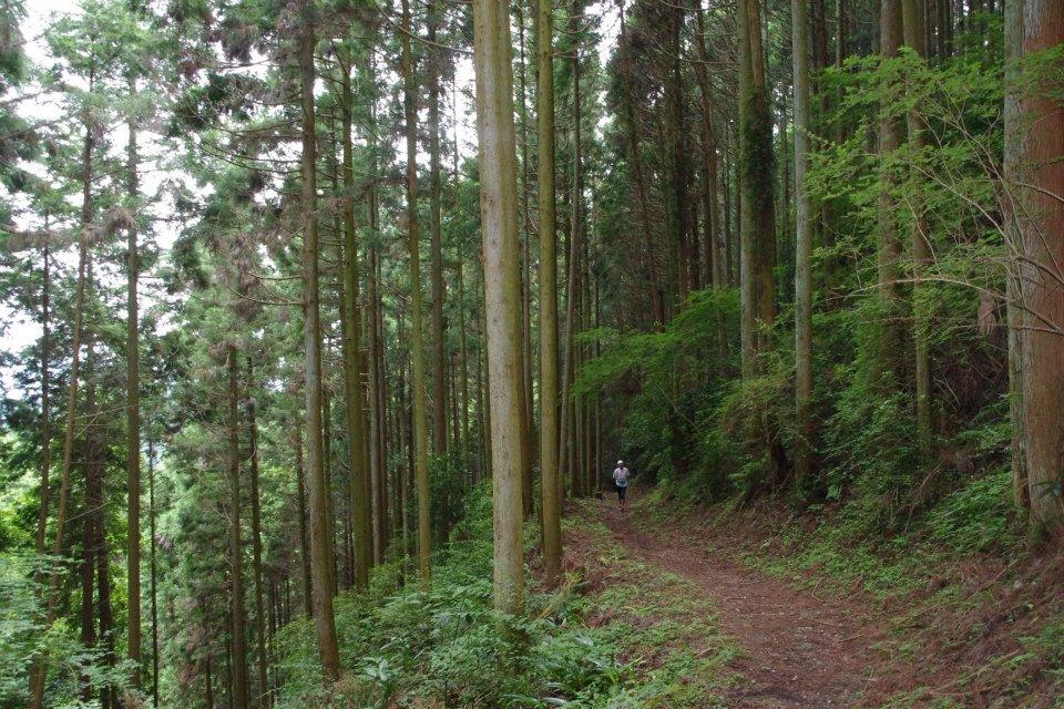 「旅RUN×古都奈良 第3回 明日香村トレイルラン」の画像