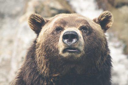「クマ、イノシシ、蜂……トレラン前に知っておきたい山の生物」の画像
