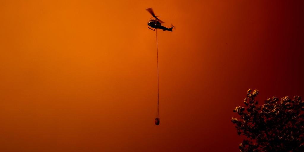「数億匹の動物が犠牲になった豪火災「約3800円」寄付のチャリティラン開催」の画像